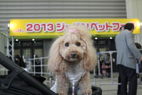 ジャパンペットフェア2013