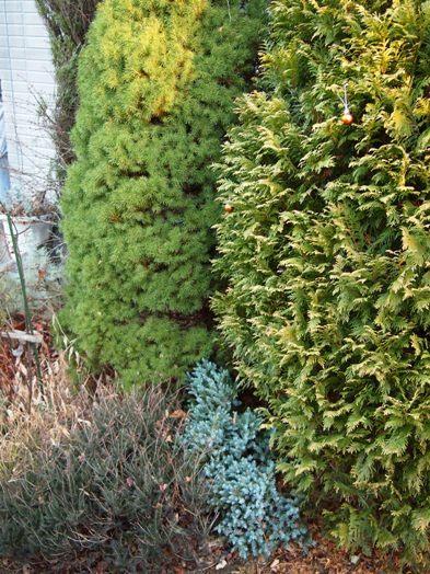 my-garden 056