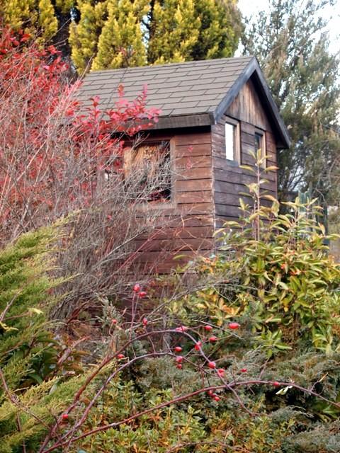 my-garden 082 (2)