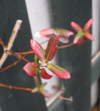 my-garden 126
