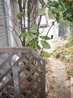 my-garden 033 (3)