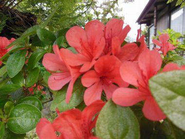 2012_0530_063434-DSCN0006.jpg