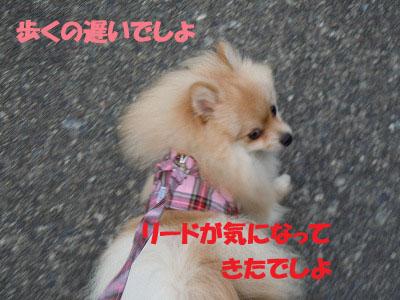 DSCN0718_edited-1.jpg