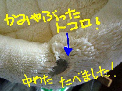 snap_rikineechan_20121112429.jpg