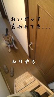 201206230922444af.jpg