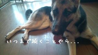 20120721111958cbe.jpg