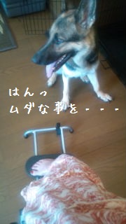 20120721111959978.jpg