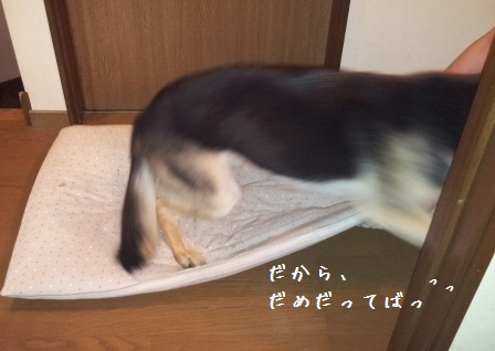 2012092010333815b.jpg