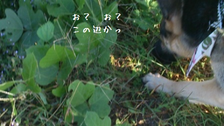 201210151019546de.jpg