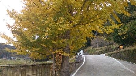 20121124094636f75.jpg