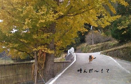 2012112410040632b.jpg