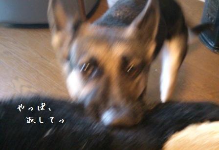 20121214110304a98.jpg