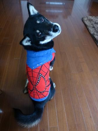 スパイダーマン5