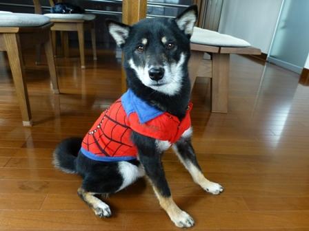 スパイダーマン9