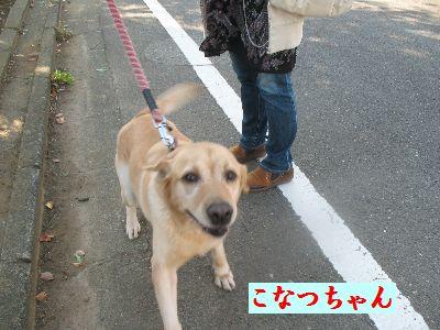 IMG_0637こなつちゃん