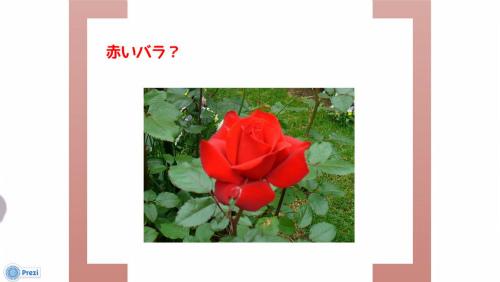 赤いバラにしようか?