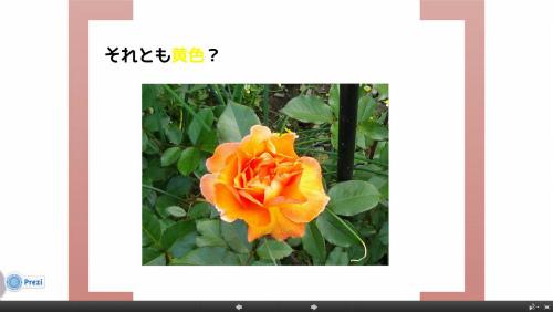 それとも黄色いバラ?