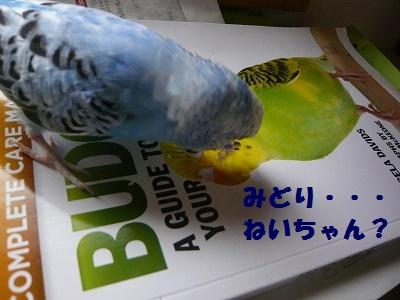 s-P1150669.jpg