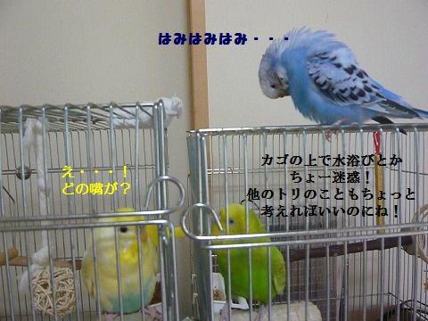 s-P1150841.jpg