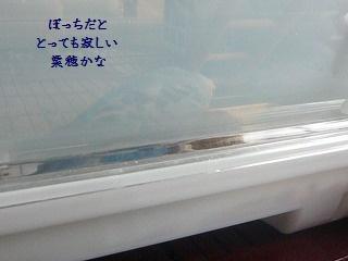s2-P1150727.jpg