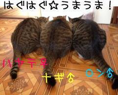 3_201312301716571c0.jpg