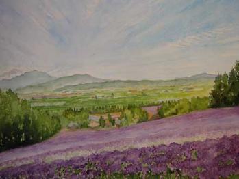 富良野のラベンダーの丘