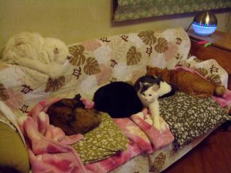 ソファーに雑魚寝~5にゃん勢揃い~ウニ、ゴマ、タコ、チョビ、レブン~2012.12.21