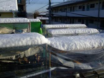 東京南部2013.01.14~7年ぶりの大雪被害(´ヘ`;)一夜開けても積もる雪景色~2013.01.15
