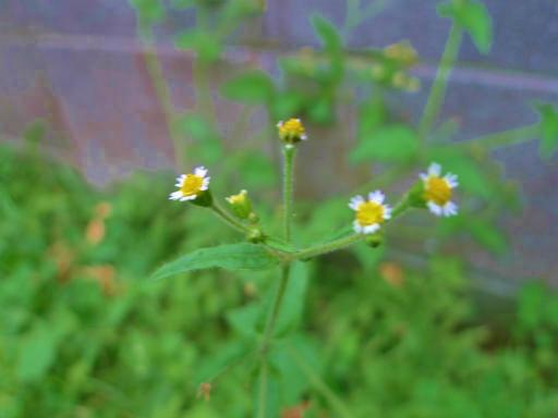 20121202・植物03