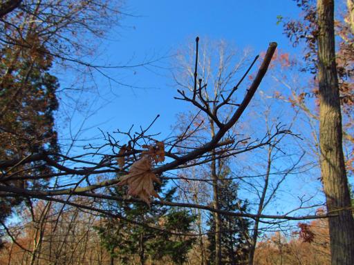20121216・緑の森納会12