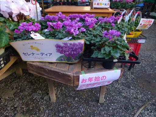 20130102・初詣植物04
