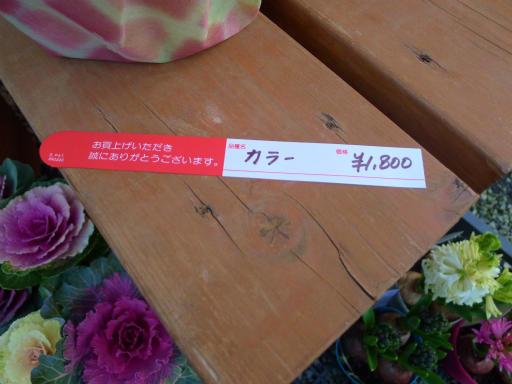 20130102・初詣植物11