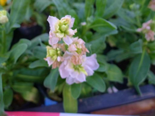 20130102・初詣植物19
