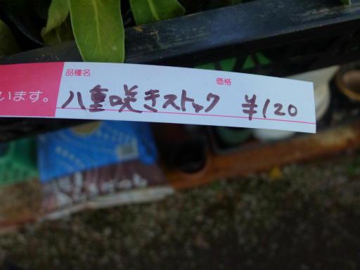 20130102・初詣植物20