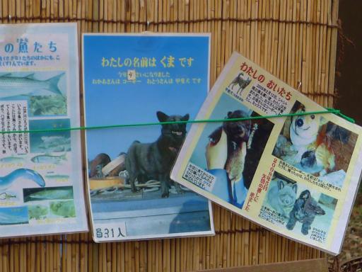 20120107・葛飾09-08