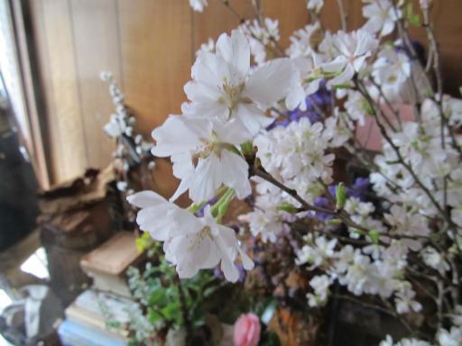 20130324・桜02