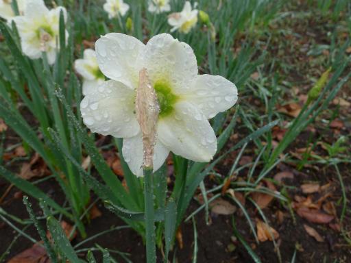 20130327・植物04-2