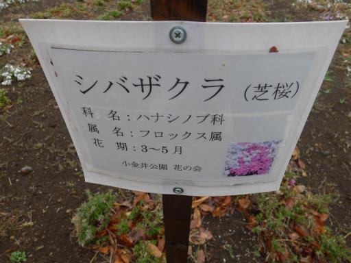 20130327・植物03-1