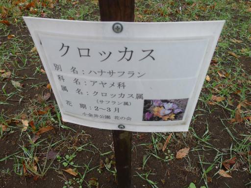 20130327・植物05-1