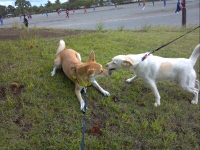 fc2blog_20120926220044890.jpg
