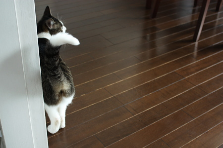 なんかたべたい!なんかたべたい!なんかたべたい!