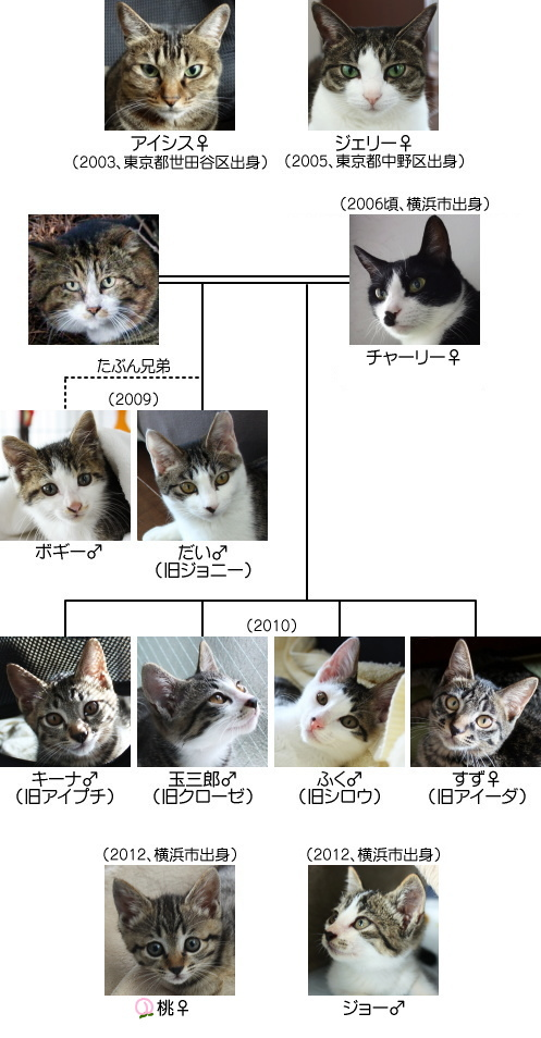 猫の系図2012