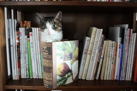 ちびの前にあるのは、本のような箱
