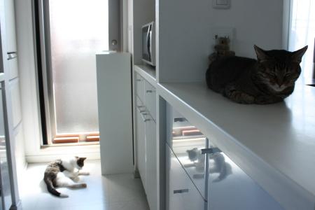日向の白猫、日陰の黒猫は撮りにくい