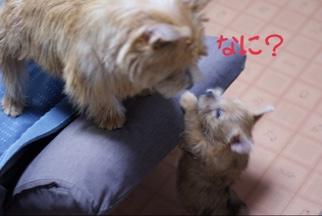 fc2blog_20141019113231143.jpg
