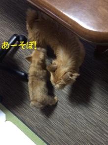 fc2blog_20141029220805762.jpg