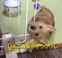 fc2blog_201410292224580a9.jpg