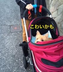 fc2blog_2014111618135204d.jpg