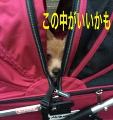 fc2blog_201411161819373b2.jpg