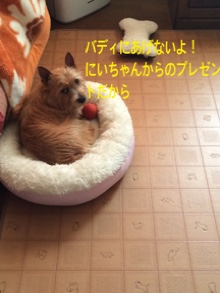 fc2blog_201411231043524a8.jpg